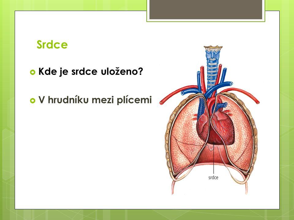Srdce  Kde je srdce uloženo?  V hrudníku mezi plícemi