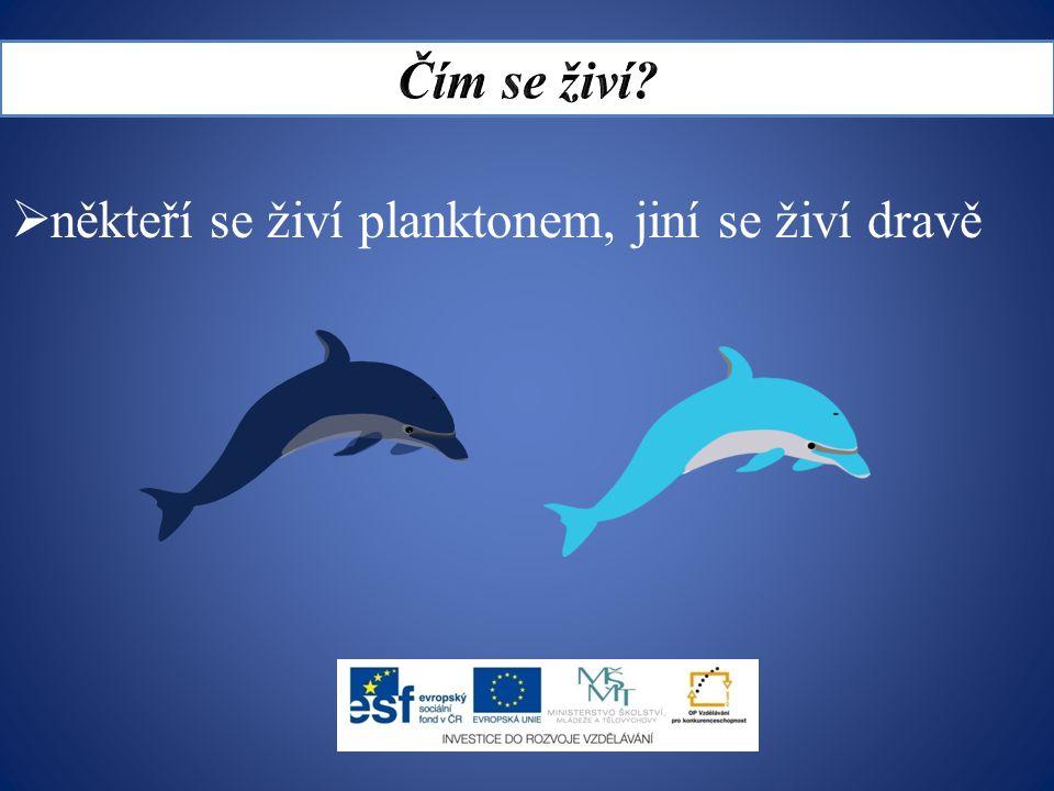  někteří se živí planktonem, jiní se živí dravě