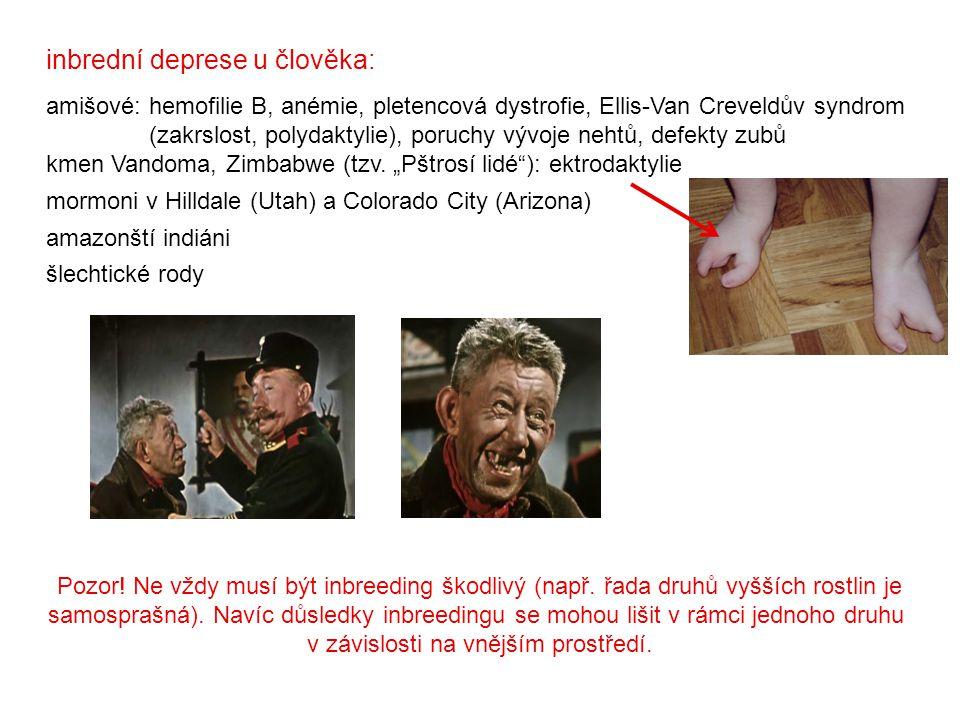 inbrední deprese u člověka: amišové: hemofilie B, anémie, pletencová dystrofie, Ellis-Van Creveldův syndrom (zakrslost, polydaktylie), poruchy vývoje