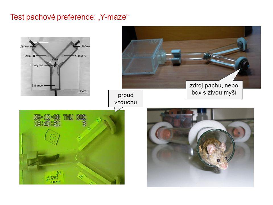 """zdroj pachu, nebo box s živou myší Test pachové preference: """"Y-maze"""" proud vzduchu"""