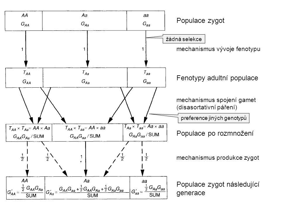 Fenotypy adultní populace Populace zygot Populace po rozmnožení mechanismus spojení gamet (disasortativní páření) mechanismus vývoje fenotypu mechanis