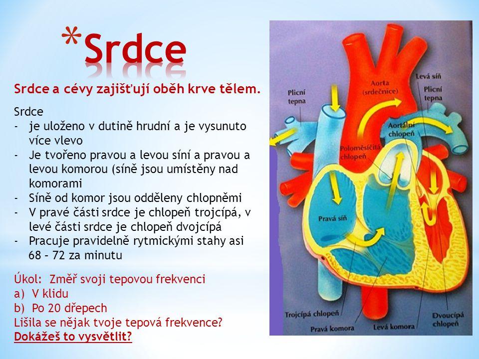 Srdce a cévy zajišťují oběh krve tělem. Srdce -je uloženo v dutině hrudní a je vysunuto více vlevo -Je tvořeno pravou a levou síní a pravou a levou ko