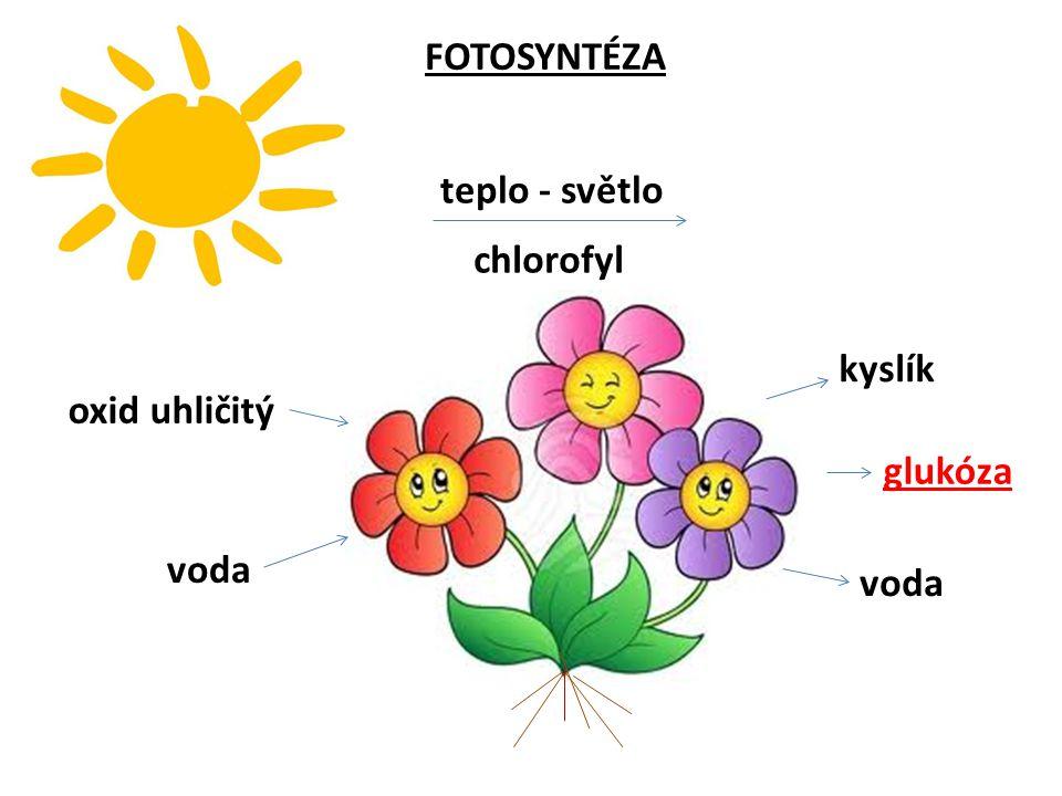 FOTOSYNTÉZA oxid uhličitý voda glukóza kyslík voda teplo - světlo chlorofyl