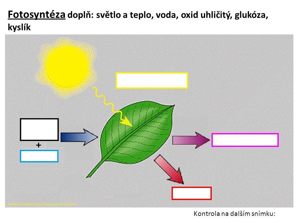 Fotosyntéza doplň: světlo a teplo, voda, oxid uhličitý, glukóza, kyslík Kontrola na dalším snímku: