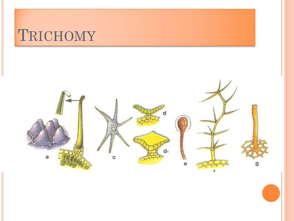 T RICHOMY