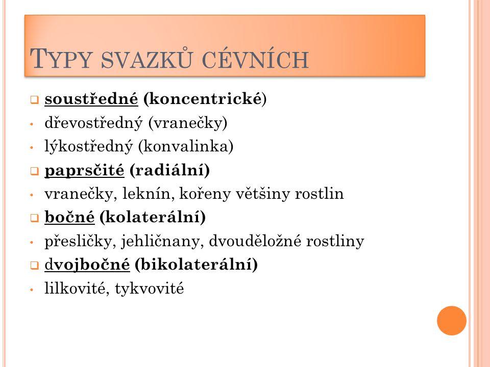 T YPY SVAZKŮ CÉVNÍCH  soustředné (koncentrické ) dřevostředný (vranečky) lýkostředný (konvalinka)  paprsčité (radiální) vranečky, leknín, kořeny vět