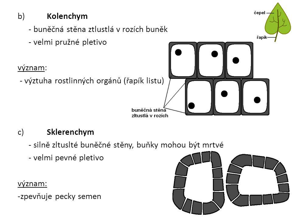 b) Kolenchym - buněčná stěna ztlustlá v rozích buněk - velmi pružné pletivo význam: - výztuha rostlinných orgánů (řapík listu) c) Sklerenchym - silně zltuslté buněčné stěny, buňky mohou být mrtvé - velmi pevné pletivo význam: -zpevňuje pecky semen