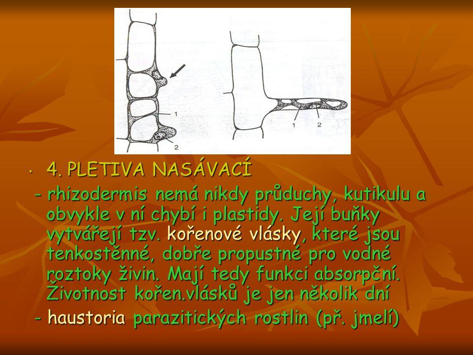 4. PLETIVA NASÁVACÍ 4. PLETIVA NASÁVACÍ - rhizodermis nemá nikdy průduchy, kutikulu a obvykle v ní chybí i plastidy. Její buňky vytvářejí tzv. kořenov