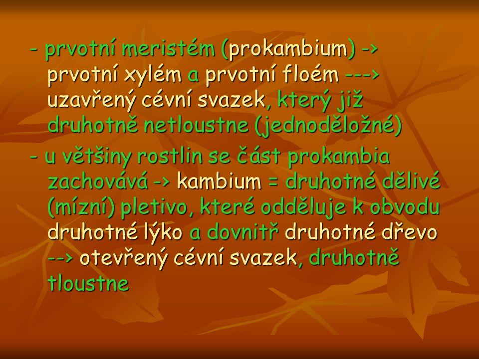 - prvotní meristém (prokambium) -› prvotní xylém a prvotní floém ---› uzavřený cévní svazek, který již druhotně netloustne (jednoděložné) - u většiny