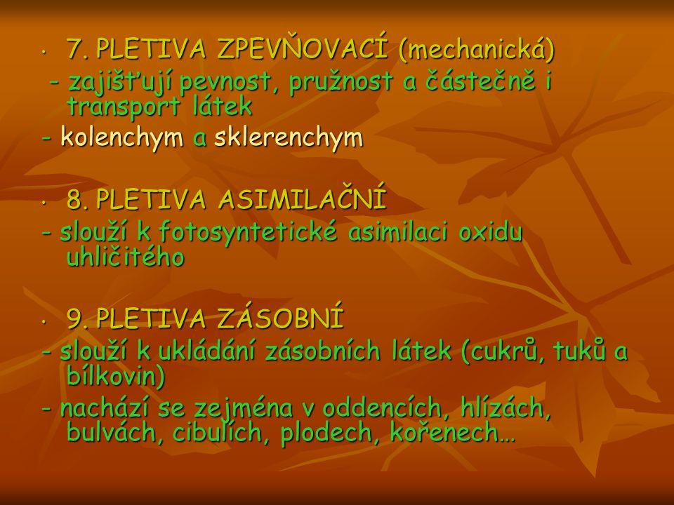 7. PLETIVA ZPEVŇOVACÍ (mechanická) - zajišťují pevnost, pružnost a částečně i transport látek - kolenchym a sklerenchym 8. PLETIVA ASIMILAČNÍ - slouží