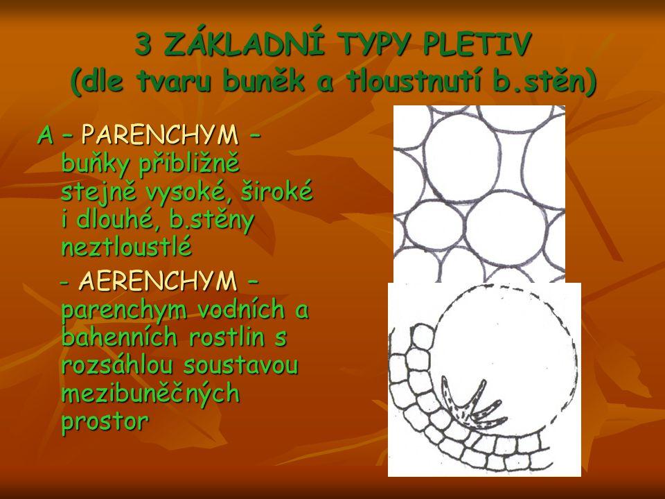 3 ZÁKLADNÍ TYPY PLETIV (dle tvaru buněk a tloustnutí b.stěn) A – PARENCHYM – buňky přibližně stejně vysoké, široké i dlouhé, b.stěny neztloustlé - AER
