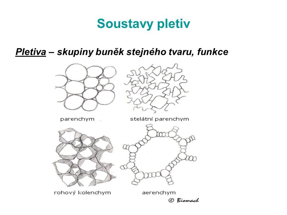 Soustavy pletiv Pletiva – skupiny buněk stejného tvaru, funkce