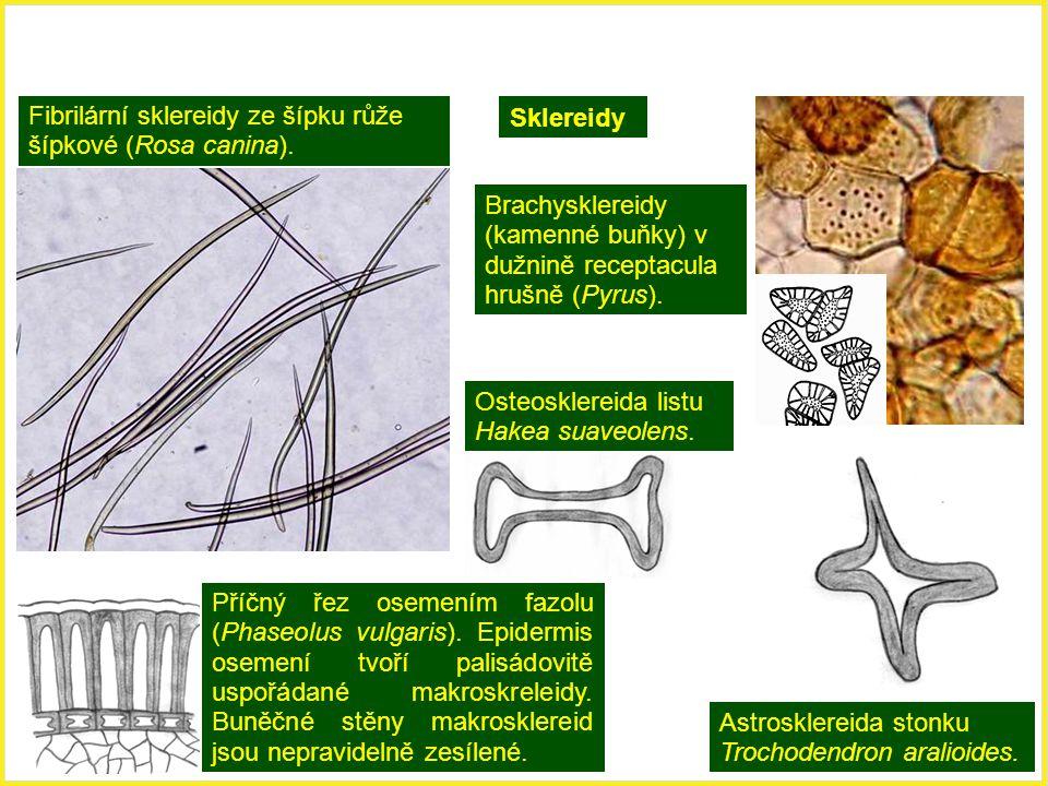 Fibrilární sklereidy ze šípku růže šípkové (Rosa canina). Brachysklereidy (kamenné buňky) v dužnině receptacula hrušně (Pyrus). Příčný řez osemením fa