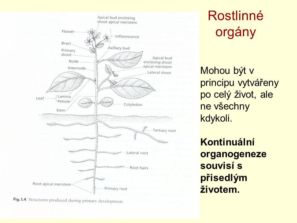 Rostlinné orgány Mohou být v principu vytvářeny po celý život, ale ne všechny kdykoli. Kontinuální organogeneze souvisí s přisedlým životem.