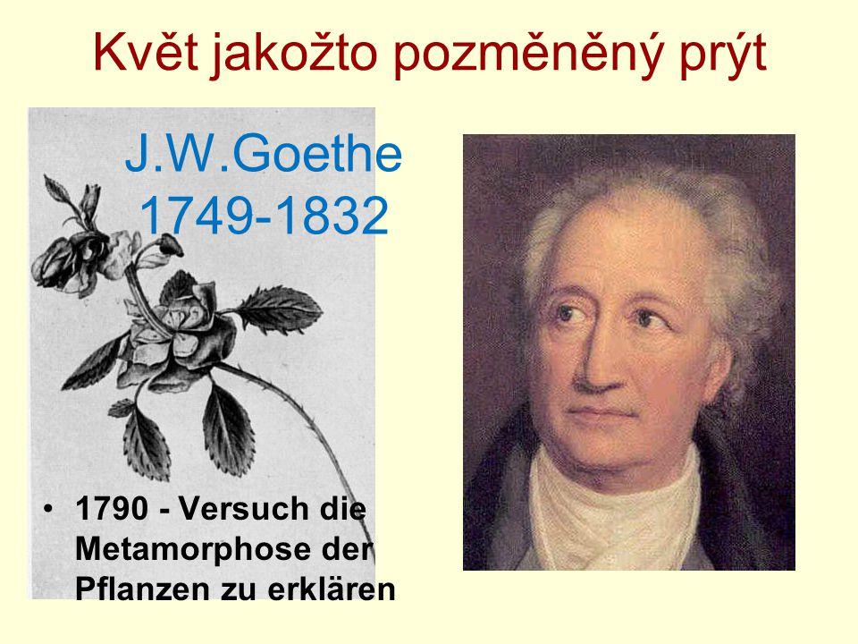 Květ jakožto pozměněný prýt J.W.Goethe 1749-1832 1790 - Versuch die Metamorphose der Pflanzen zu erklären