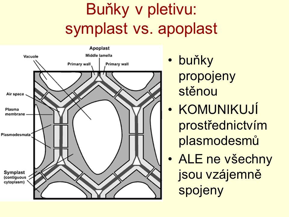 Buňky v pletivu: symplast vs. apoplast buňky propojeny stěnou KOMUNIKUJÍ prostřednictvím plasmodesmů ALE ne všechny jsou vzájemně spojeny