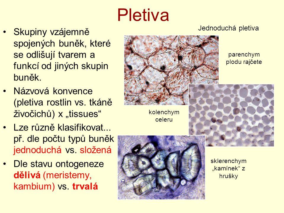 Pletiva Skupiny vzájemně spojených buněk, které se odlišují tvarem a funkcí od jiných skupin buněk. Názvová konvence (pletiva rostlin vs. tkáně živoči