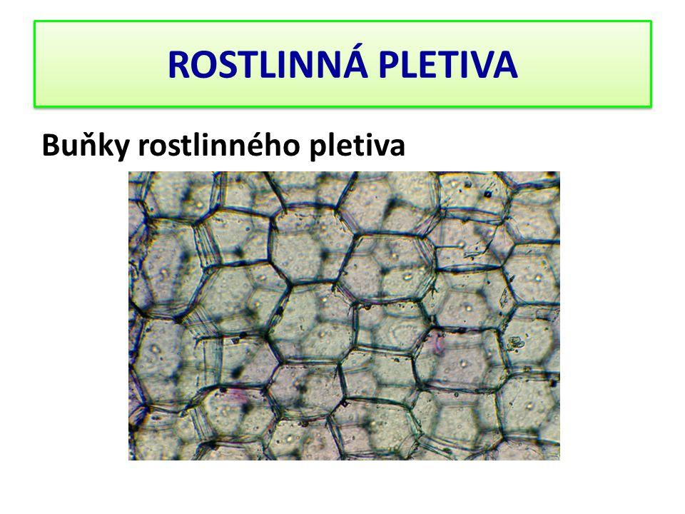 Buňky rostlinného pletiva