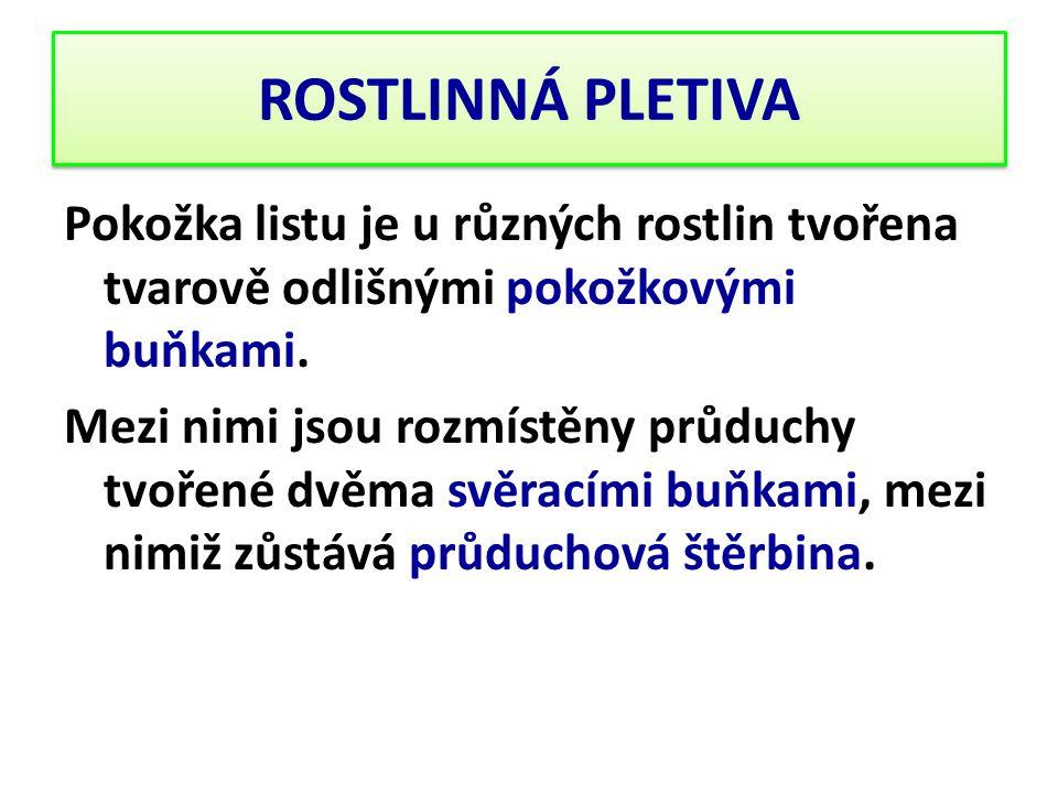 ROSTLINNÁ PLETIVA