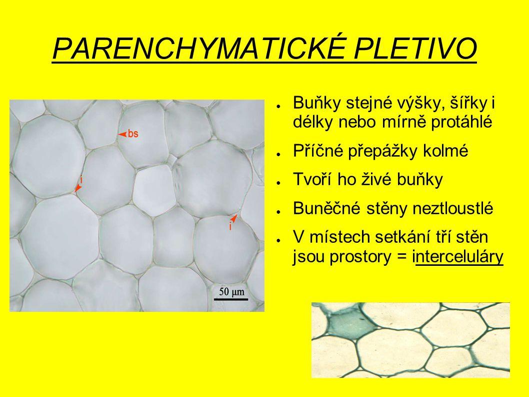 PARENCHYMATICKÉ PLETIVO ● Buňky stejné výšky, šířky i délky nebo mírně protáhlé ● Příčné přepážky kolmé ● Tvoří ho živé buňky ● Buněčné stěny neztlous