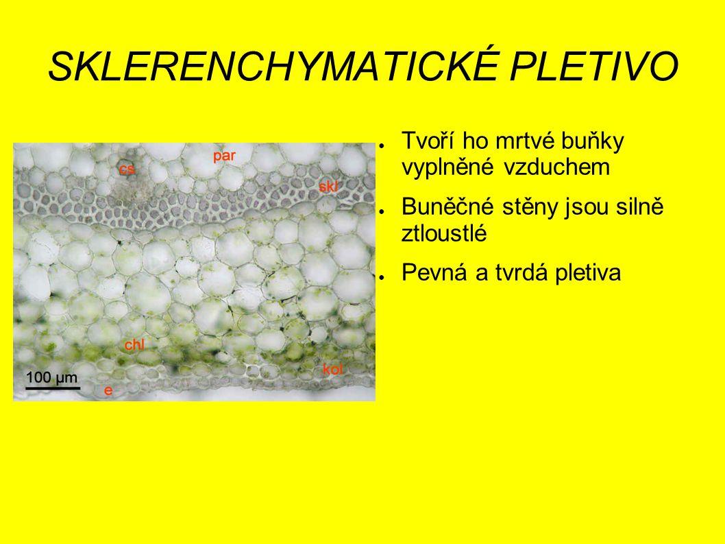 SKLERENCHYMATICKÉ PLETIVO ● Tvoří ho mrtvé buňky vyplněné vzduchem ● Buněčné stěny jsou silně ztloustlé ● Pevná a tvrdá pletiva