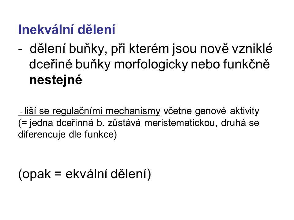 Inekvální dělení - dělení buňky, při kterém jsou nově vzniklé dceřiné buňky morfologicky nebo funkčně nestejné (opak = ekvální dělení) - liší se regul