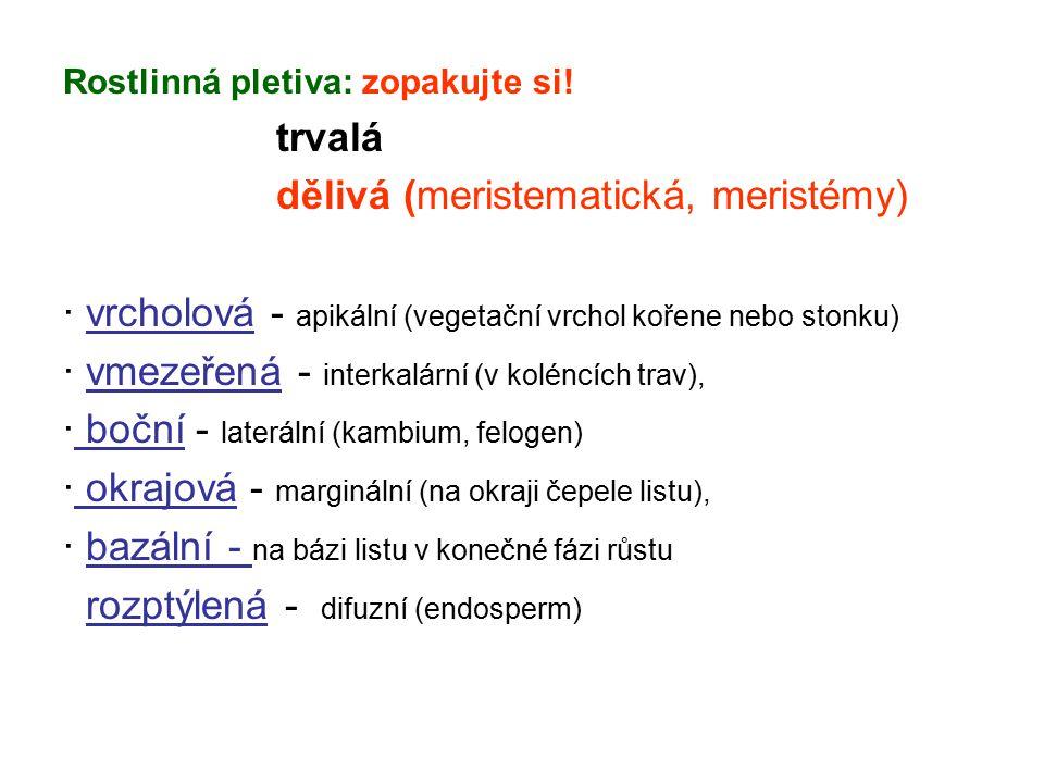 Rostlinná pletiva: zopakujte si! trvalá dělivá (meristematická, meristémy) · vrcholová - apikální (vegetační vrchol kořene nebo stonku) · vmezeřená -