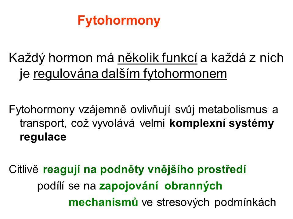 Fytohormony Každý hormon má několik funkcí a každá z nich je regulována dalším fytohormonem Fytohormony vzájemně ovlivňují svůj metabolismus a transpo