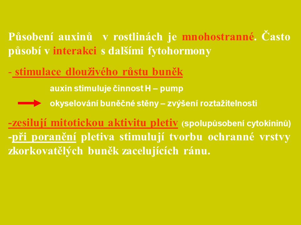 Působení auxinů v rostlinách je mnohostranné. Často působí v interakci s dalšími fytohormony - stimulace dlouživého růstu buněk auxin stimuluje činnos