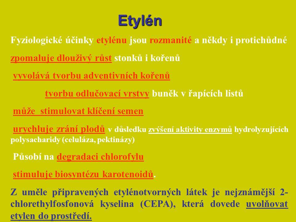 Fyziologické účinky etylénu jsou rozmanité a někdy i protichůdné zpomaluje dlouživý růst stonků i kořenů vyvolává tvorbu adventivních kořenů tvorbu od
