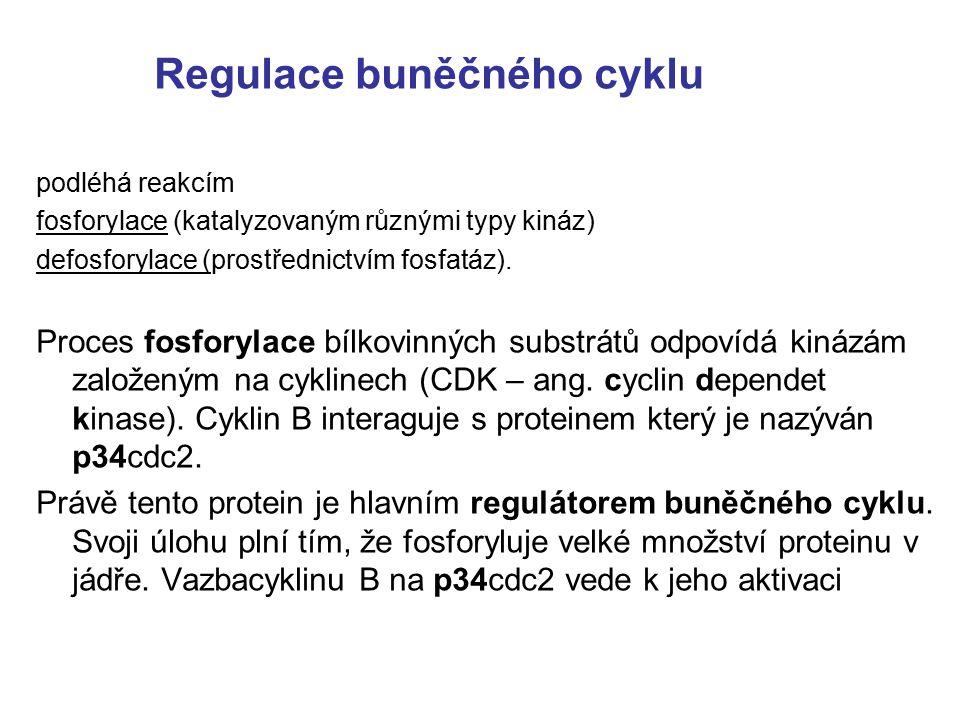 Fytohormony jsou organické sloučeniny, syntetizované v určitých pletivech (částech) rostliny.
