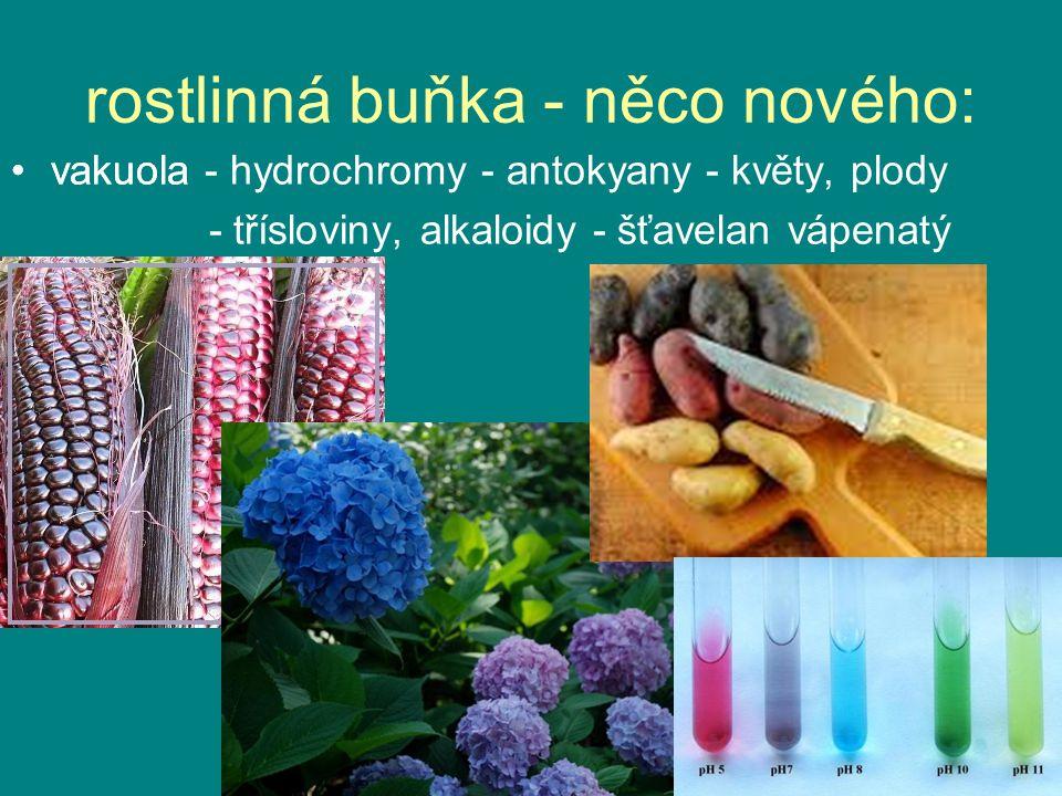 rostlinná buňka - něco nového: vakuola - hydrochromy - antokyany - květy, plody - třísloviny, alkaloidy - šťavelan vápenatý vakuola