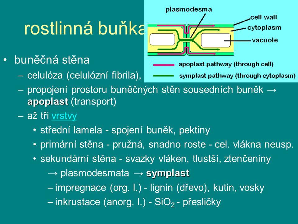 rostlinná buňka - něco nového: buněčná stěna –celulóza (celulózní fibrila), pektiny, extensin apoplast –propojení prostoru buněčných stěn sousedních b