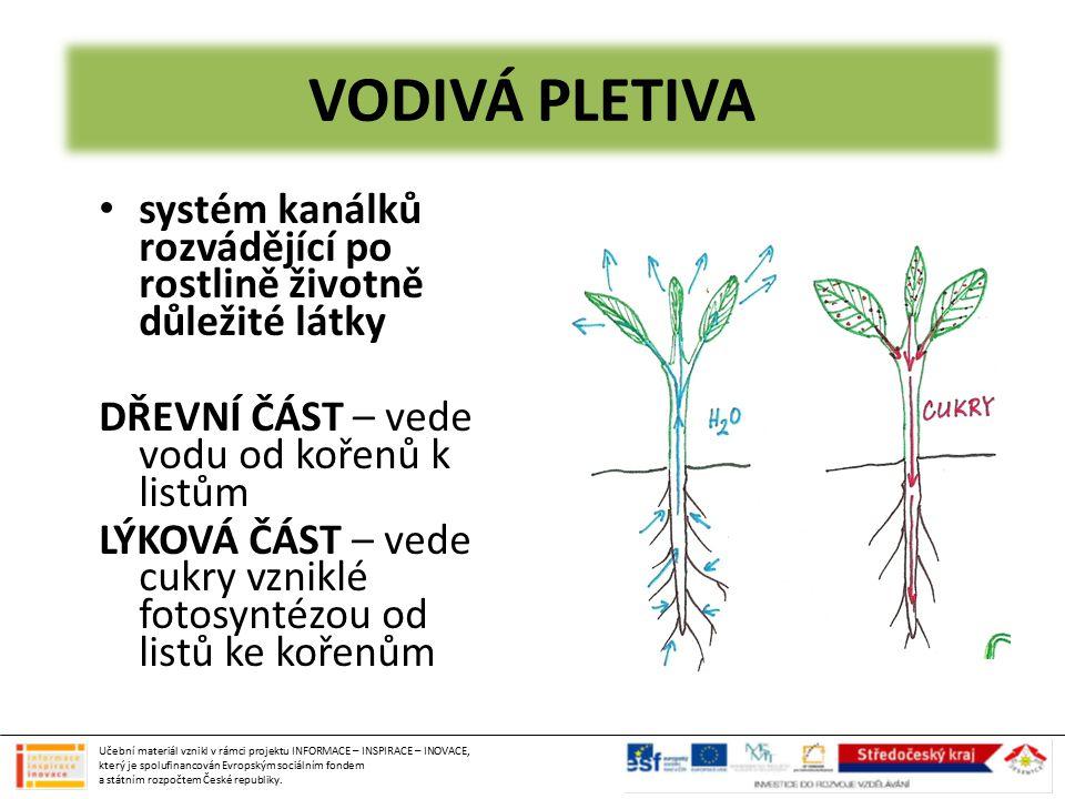 VODIVÁ PLETIVA systém kanálků rozvádějící po rostlině životně důležité látky DŘEVNÍ ČÁST – vede vodu od kořenů k listům LÝKOVÁ ČÁST – vede cukry vznik