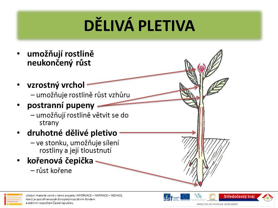 KOŘEN upevňuje rostlinu v půdě přijímá z půdy vodu a v ní rozpuštěné látky ukládání zásobních látek 1) kořenové vlásky – vstřebávání vody a minerálních látek z půdy 2) vodivá pletiva – zásobení kořene cukry, odvádění vody do horních částí rostliny 3) růstový vrchol – probíhá zde dělení buněk – růst kořene 4) kořenová čepička – kryje růstový vrchol Učební materiál vznikl v rámci projektu INFORMACE – INSPIRACE – INOVACE, který je spolufinancován Evropským sociálním fondem a státním rozpočtem České republiky.