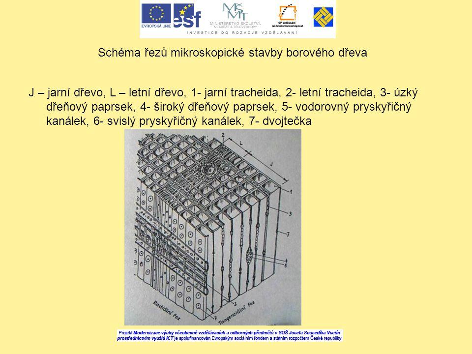 Schéma řezů mikroskopické stavby borového dřeva J – jarní dřevo, L – letní dřevo, 1- jarní tracheida, 2- letní tracheida, 3- úzký dřeňový paprsek, 4-