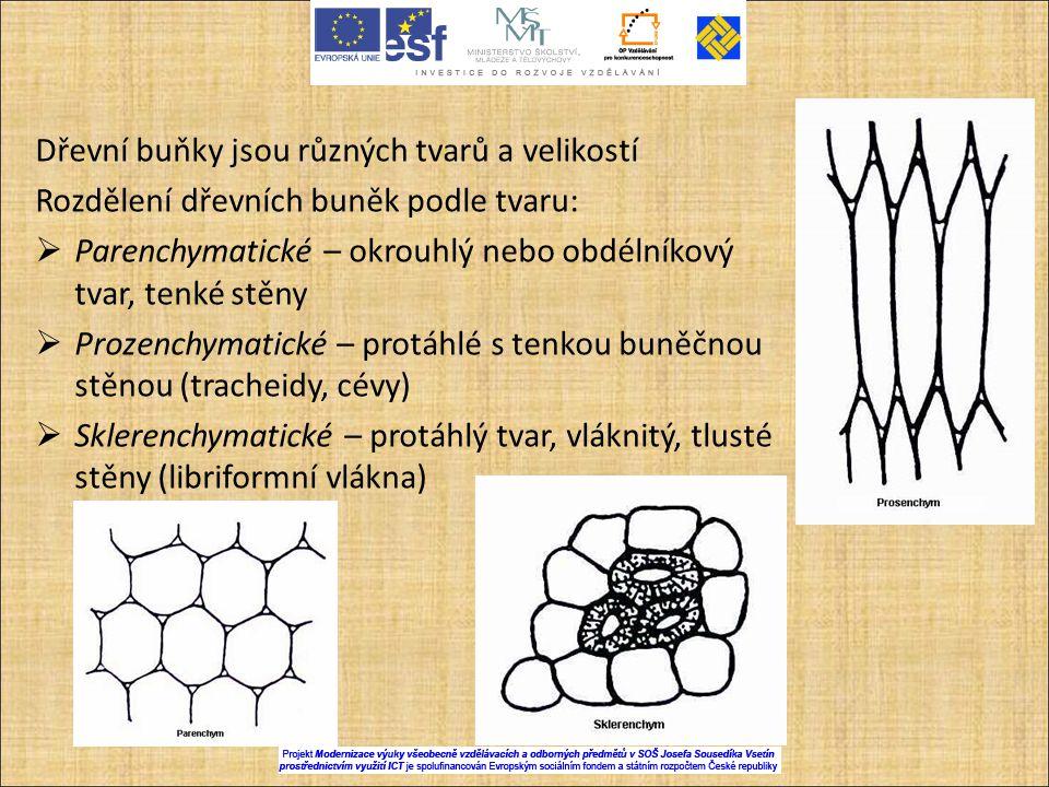 Dřevní buňky jsou různých tvarů a velikostí Rozdělení dřevních buněk podle tvaru:  Parenchymatické – okrouhlý nebo obdélníkový tvar, tenké stěny  Pr