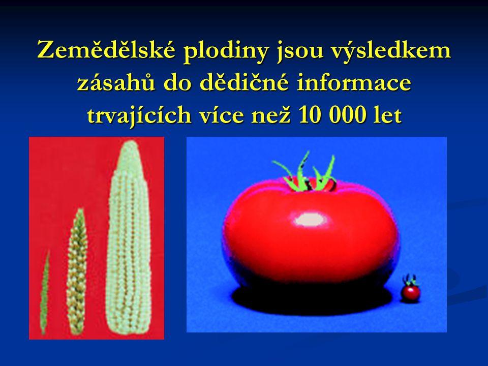 Zemědělské plodiny jsou výsledkem zásahů do dědičné informace trvajících více než 10 000 let