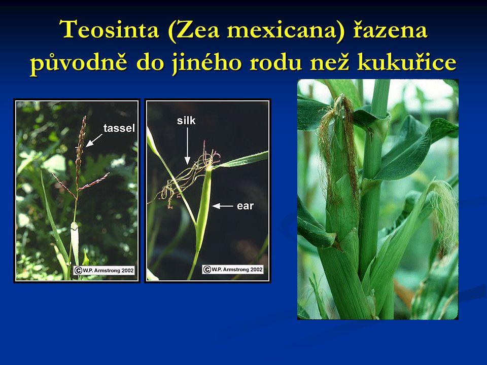 Teosinta (Zea mexicana) řazena původně do jiného rodu než kukuřice