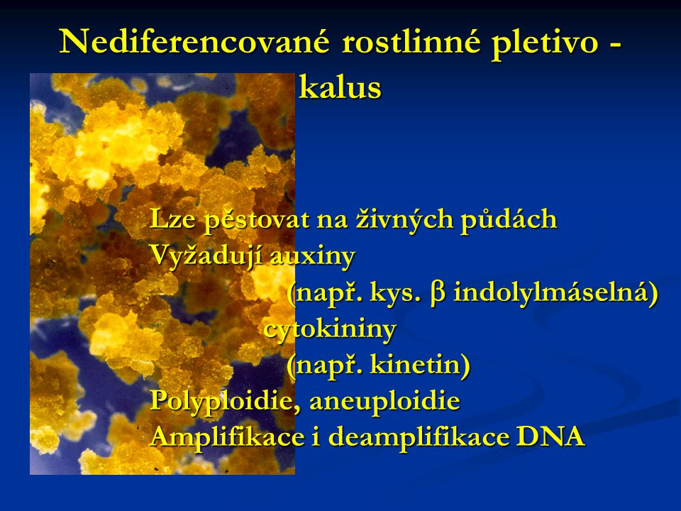 Nediferencované rostlinné pletivo - kalus Lze pěstovat na živných půdách Vyžadují auxiny (např. kys.  indolylmáselná) cytokininy cytokininy (např. ki
