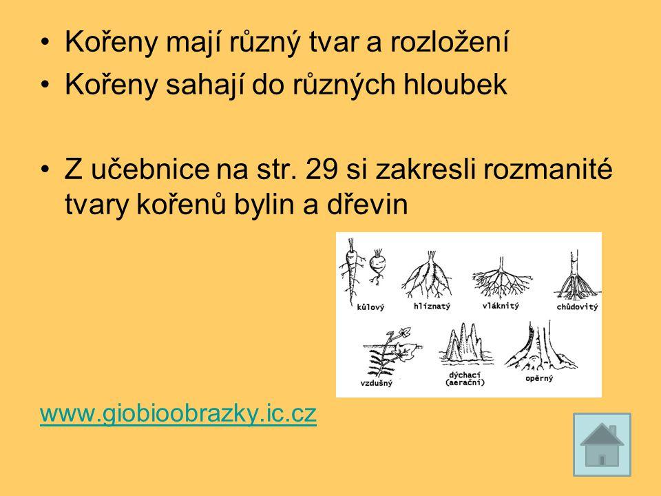 Kořeny mají různý tvar a rozložení Kořeny sahají do různých hloubek Z učebnice na str. 29 si zakresli rozmanité tvary kořenů bylin a dřevin www.giobio