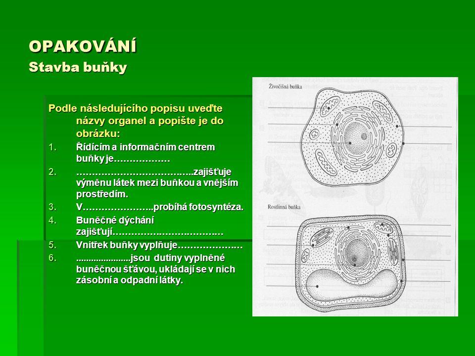 OPAKOVÁNÍ Stavba buňky Podle následujícího popisu uveďte názvy organel a popište je do obrázku: 1.Řídícím a informačním centrem buňky je……………… 2.……………