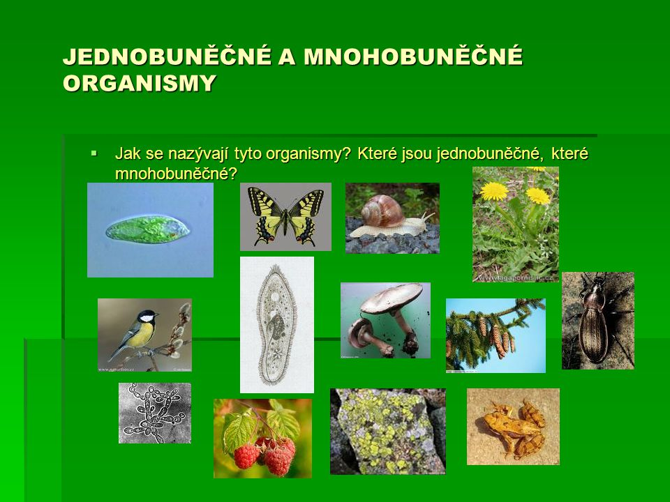 JEDNOBUNĚČNÉ A MNOHOBUNĚČNÉ ORGANISMY  Jak se nazývají tyto organismy? Které jsou jednobuněčné, které mnohobuněčné?