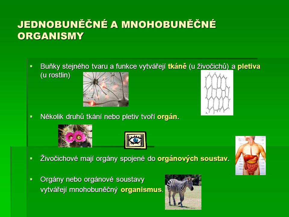 JEDNOBUNĚČNÉ A MNOHOBUNĚČNÉ ORGANISMY  Buňky stejného tvaru a funkce vytvářejí tkáně (u živočichů) a pletiva (u rostlin)  Několik druhů tkání nebo p