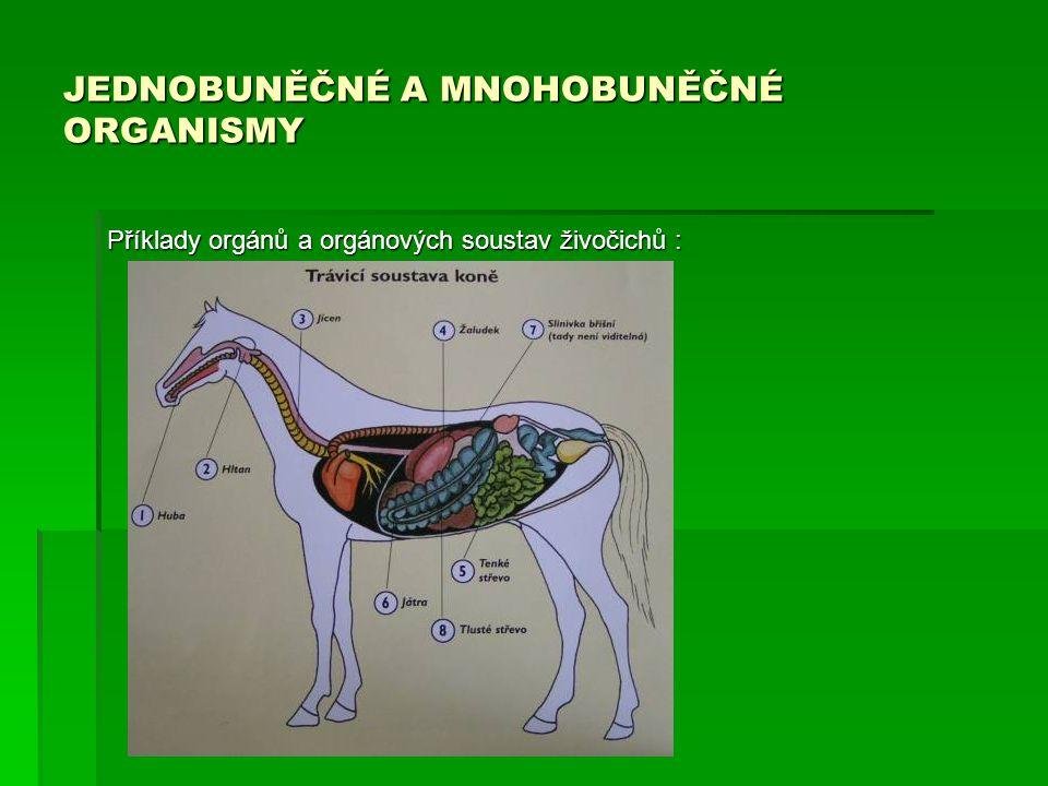JEDNOBUNĚČNÉ A MNOHOBUNĚČNÉ ORGANISMY Příklady orgánů a orgánových soustav živočichů :