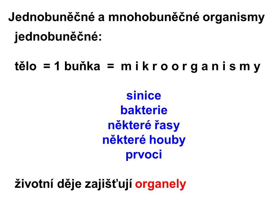 Jednobuněčné a mnohobuněčné organismy jednobuněčné: tělo = 1 buňka = m i k r o o r g a n i s m y sinice bakterie některé řasy některé houby prvoci životní děje zajišťují organely