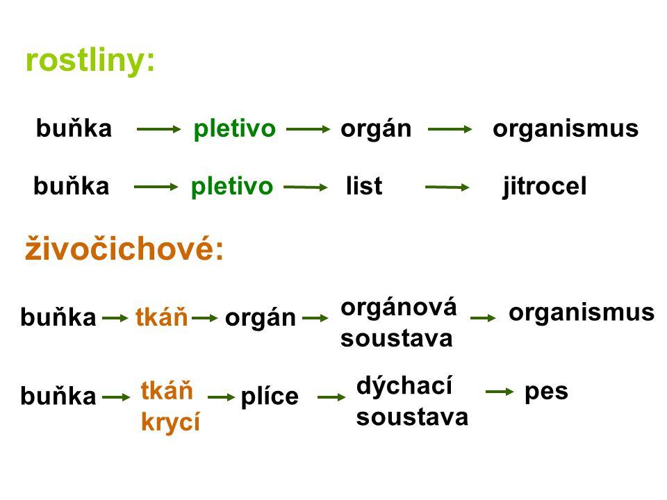 rostliny: živočichové: organismus jitrocellistpletivobuňka orgánová soustava orgántkáňbuňka organismusorgánpletivobuňka dýchací soustava plíce tkáň krycí buňka pes