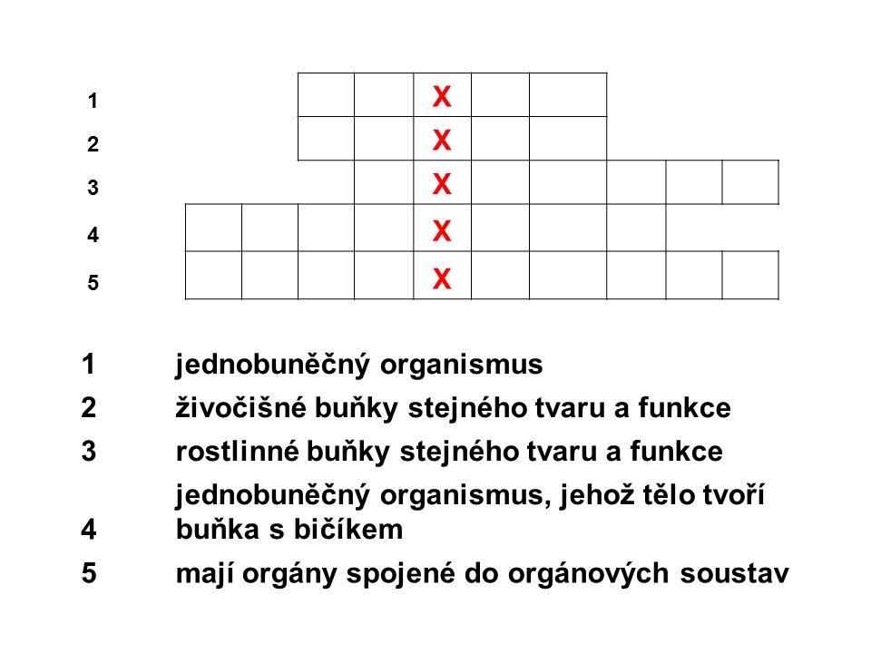 1 X 2 X 3 X 4 X 5 X 1jednobuněčný organismus 2živočišné buňky stejného tvaru a funkce 3rostlinné buňky stejného tvaru a funkce 4 jednobuněčný organismus, jehož tělo tvoří buňka s bičíkem 5mají orgány spojené do orgánových soustav