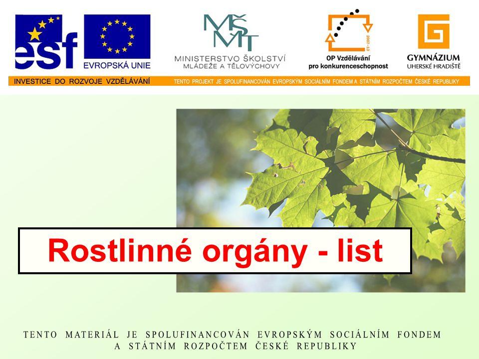 Rostlinné orgány - list