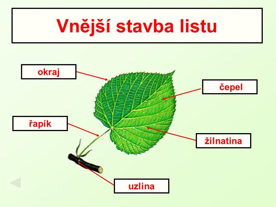 Vnější stavba listu uzlina čepel žilnatina okraj řapík